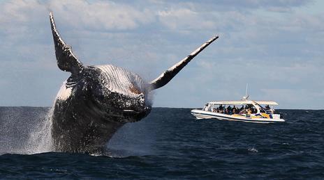Сезон Китов в Доминикане